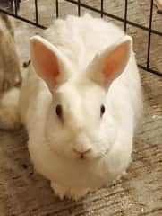 """Our elderly rabbit, Mr. Bun. He's named after a hitman bunny character in the graphic novel, """"Unwritten."""""""