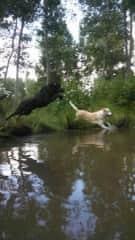 Jumbo and Lily