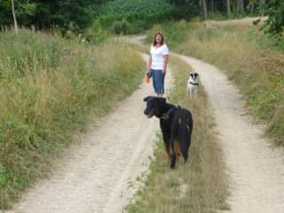Kerrylea, Balou and Yuma out for a walk, house sitting 2016