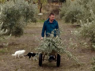 Hans busy in Spain, accompanied by 2 of the 4 cats