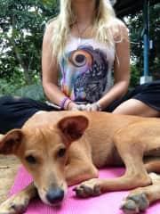 Aside from House/pet sitting I'm also a Yoga Teacher, Reiki Master and Holistic Life Coach!