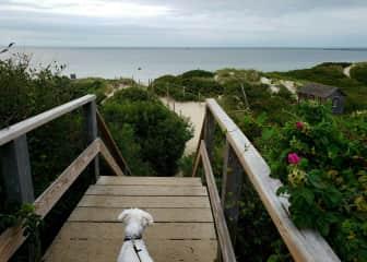 A walk to Steps Beach with Ellie.