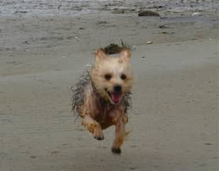 Hobbies: Beachcombing with Toby, photography, hiking, travel and kayaking