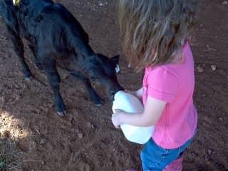 Piper and calf