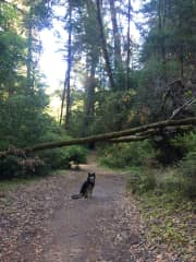 Camping trip in Henry Cowell Redwoods State Park