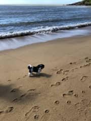 Max at trinity beach