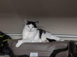 Bean is also an RV kitty!