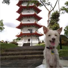 Charlemagne loves to explore Singapore