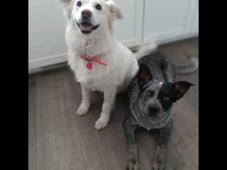Sixx and Toohey (best buddies)