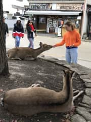 Cate making friends with the deer in Japan.