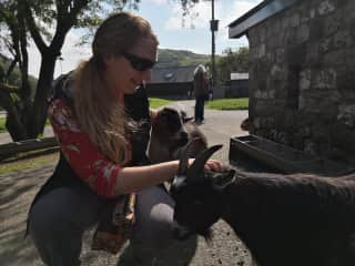 Jen with some cute goats
