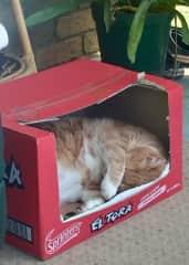 Raffie loves boxes