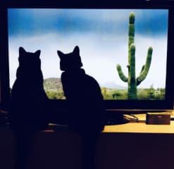 Max and Ninj love David Attenborough