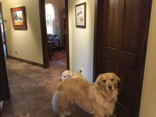 The dogs are outside the guest room waiting patiently for a friend to get up.