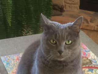 Haley, my sweet old kitty.