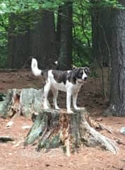 Lulu the explorer