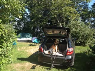 Camping, of course with Maggie :-)