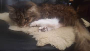 Our Cat Theo who sadly passed away this past year