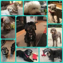 Just a few of my new furry friends!  I miss them when it's time to leave!