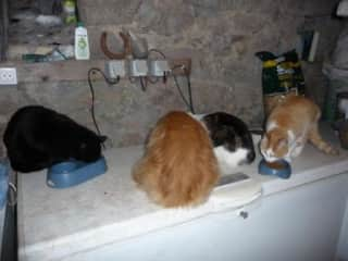 Different diets for different cats, Normandy