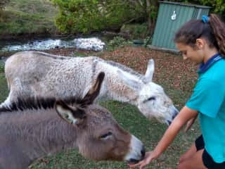 Cassi hand feeding carrots and peppermints