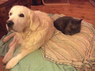 Claude sharing a bed with my lovely Tess, who unfortunately passed away 2 years ago