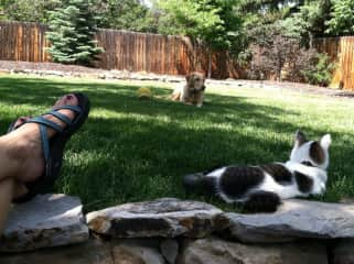 Angie, Sierra and Chasqui hanging out at home in the summers in CO