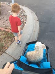 The ground was too hot in the Arizona summer so this dog got a stroller ride :)