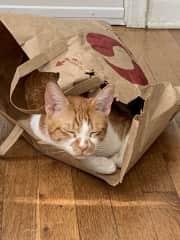 Arlo and his paper bag bunker
