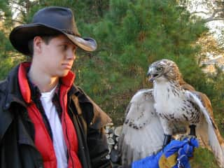One of the hawks I had while in high school. I had 4 over 4 years as a licensed falconer.