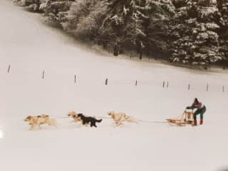Christophe and a team of his Husky's on a run