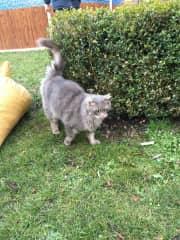 Murko in the garden