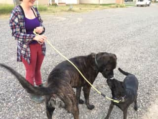 This is me and my dog Hazel (on leash) and a much bigger dog we met on a walk.