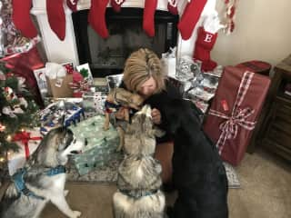 Me and my grandpups at Christmas. We have two Husky's, a lab and a tiny pup