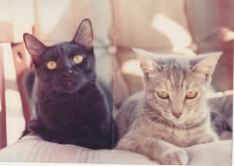 Cocoa and Miss Kitty, our first kitties