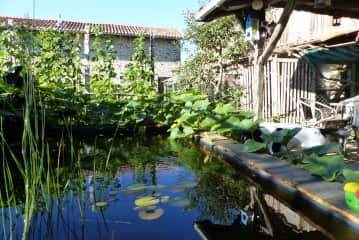 This is our pond, it houses fish, froggs and insects.