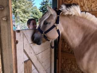 Gaining trust with horses & livestock. We understand the responsibilities & needs of farm animals.