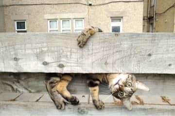 Crazy climbing on the next door neighbour's fence!