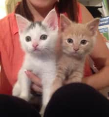 My daughter and I fostered many kittens for Cat Depot in Sarasota, Florida for two years.