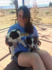 Housesitting for 17 dogs for local Breeders