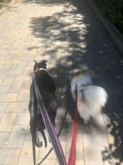 Who is walking who? Lol