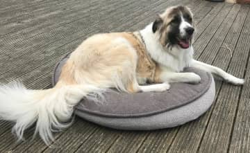 This is on the biggest dog bed they make!