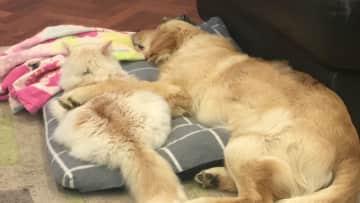 Nipper and Maple sleeping