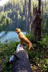 Cedar in Stillness