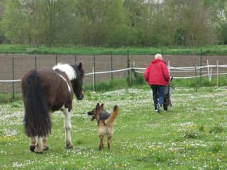 Poo picking the field early morning. horse poo that is.