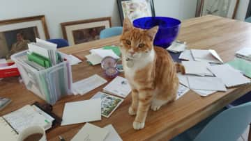 Only allowed on the surface if I am helping with the Christmas cards.