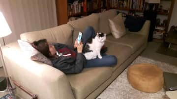 Cat-sitting - or Sitting-cat?