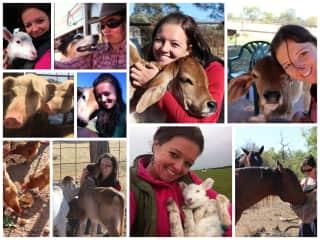 Farm animal love