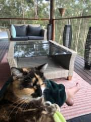 Sxonga the pussie cat