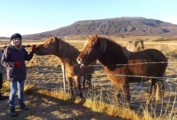 Gorgeous wild ponies in Iceland.